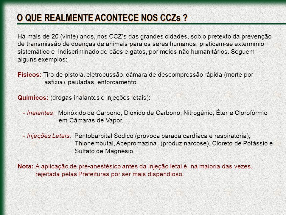 CCZ - SÃO BERNARDO DO CAMPO/ABC/SP: As execuções são realizadas por funcionários sem preparo.