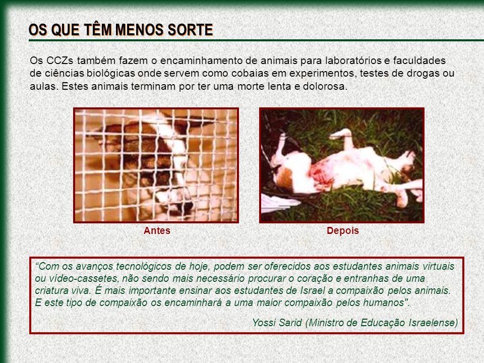 Carrocinha Nunca Mais: www.carrocinhanuncamais.com/cczs_brasil.html ENDEREÇOS DOS CENTROS DE CONTROLE DE ZOONOSES NO BRASIL: FONTES DE PESQUISA PARA ESTA APRESENTAÇÃO Animais SOS: geocities.yahoo.com.br/animaissos Apasfa: www.apasfa.org Arca Brasil: www.arcabrasil.org.br Carrocinha Nunca Mais: www.carrocinhanuncamais.com Eu Gosto de Bicho: www.eugostodebicho.com.br Mundo Cão: www.mundocao.kit.net Provida Animal: www.providaanimal.hpg.ig.com.br Vida de Cão: www.vidadecao.com.br