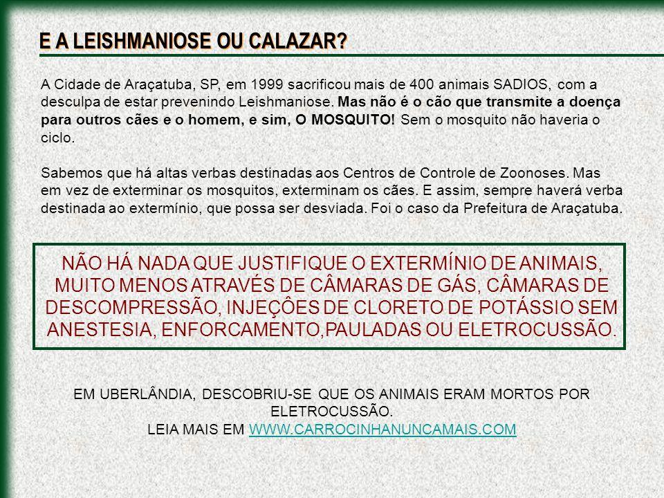 A Cidade de Araçatuba, SP, em 1999 sacrificou mais de 400 animais SADIOS, com a desculpa de estar prevenindo Leishmaniose. Mas não é o cão que transmi