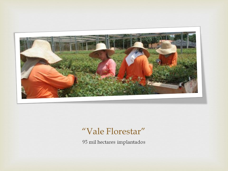 Vale Florestar 95 mil hectares implantados
