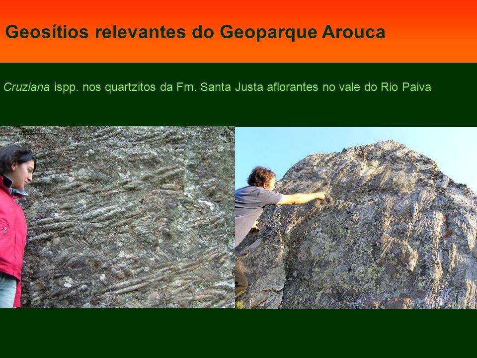 Cruziana ispp.nos quartzitos da Fm.
