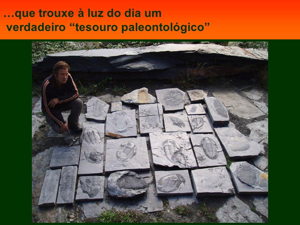 …que trouxe à luz do dia um verdadeiro tesouro paleontológico