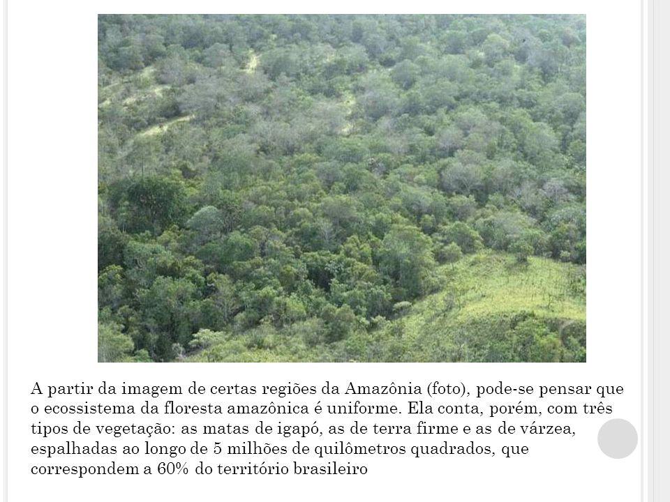 A partir da imagem de certas regiões da Amazônia (foto), pode-se pensar que o ecossistema da floresta amazônica é uniforme.