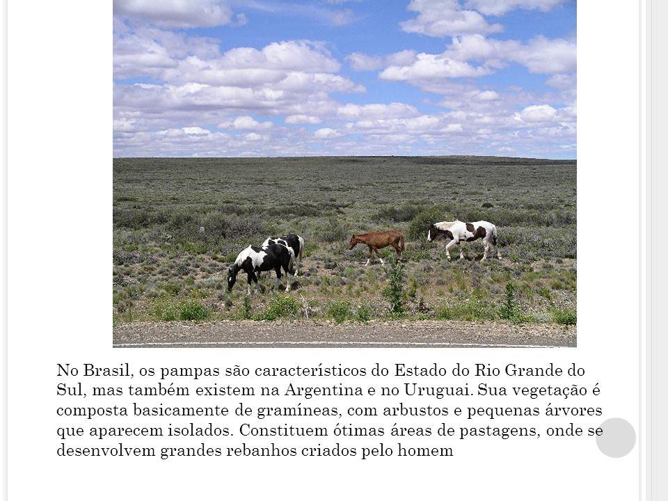 No Brasil, os pampas são característicos do Estado do Rio Grande do Sul, mas também existem na Argentina e no Uruguai.