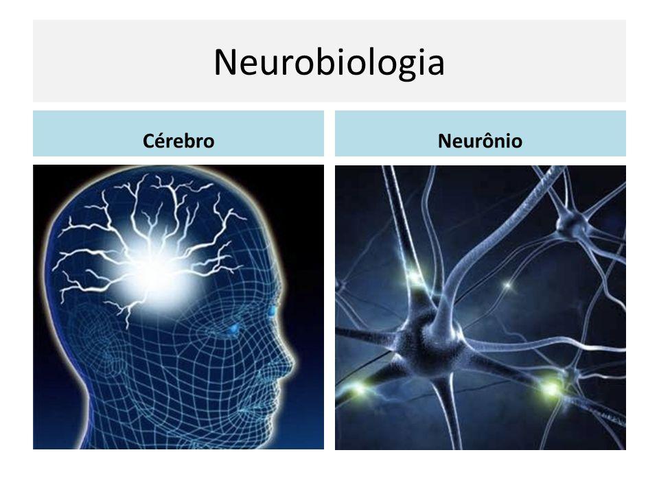 Neurobiologia CérebroNeurônio