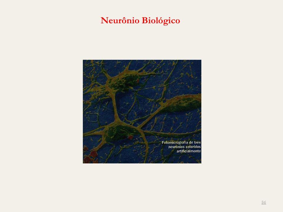 86 Neurônio Biológico