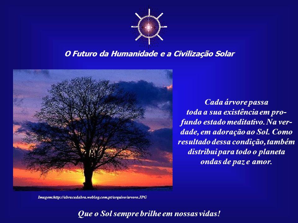 O Futuro da Humanidade e a Civilização Solar Que o Sol sempre brilhe em nossas vidas! Você já parou para pensar que as árvo- res são, com mais direito