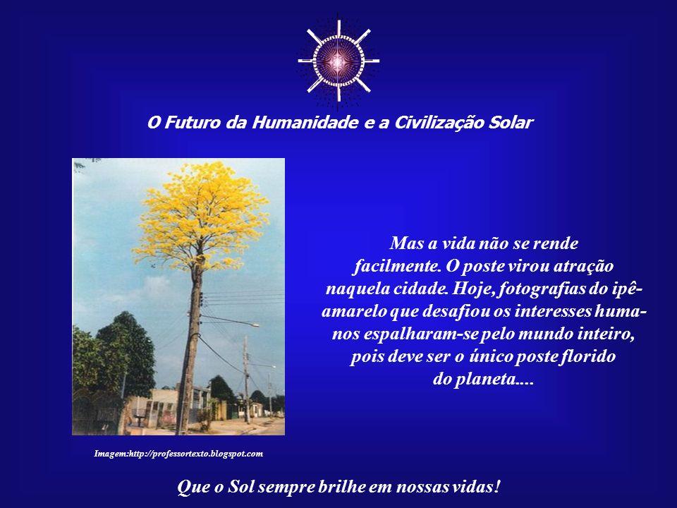 O Futuro da Humanidade e a Civilização Solar Que o Sol sempre brilhe em nossas vidas! Em Porto Velho, Rondônia, um desses anjos teima em viver. Um pos