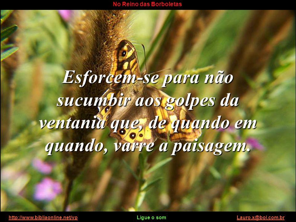 http://www.bibliaonline.net/vp Ligue o som Lauro.x@bol.com.brhttp://www.bibliaonline.net/vpLauro.x@bol.com.br No Reino das Borboletas Esforcem-se para não sucumbir aos golpes da ventania que, de quando em quando, varre a paisagem.