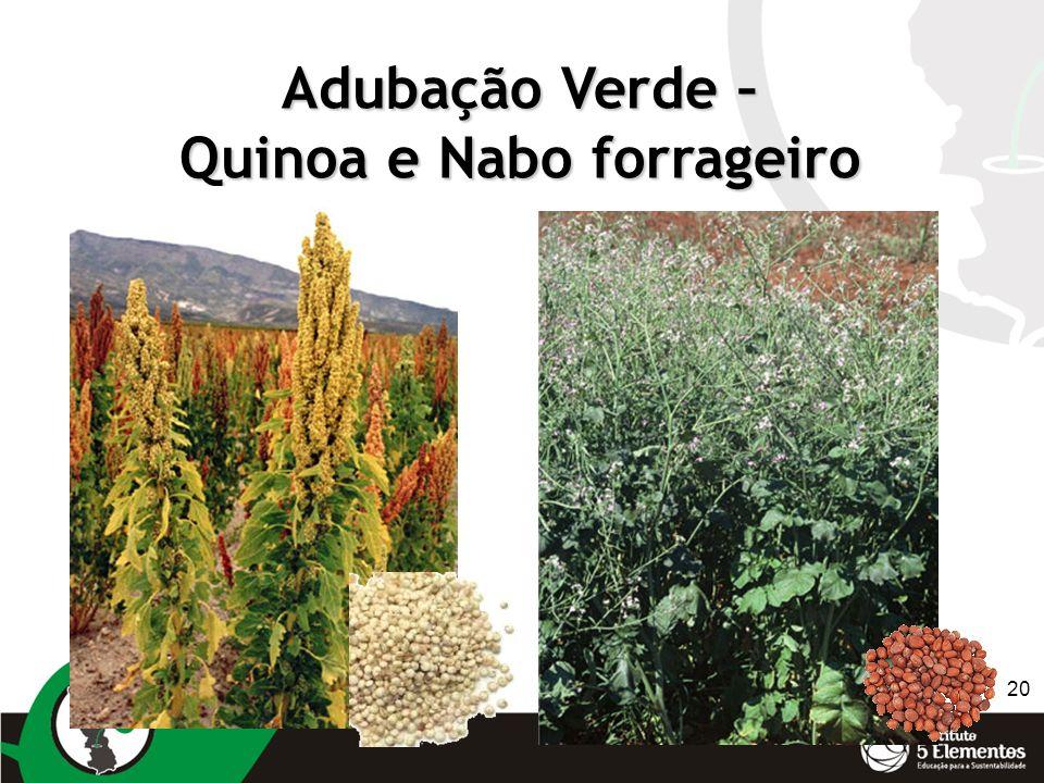 20 Adubação Verde – Quinoa e Nabo forrageiro