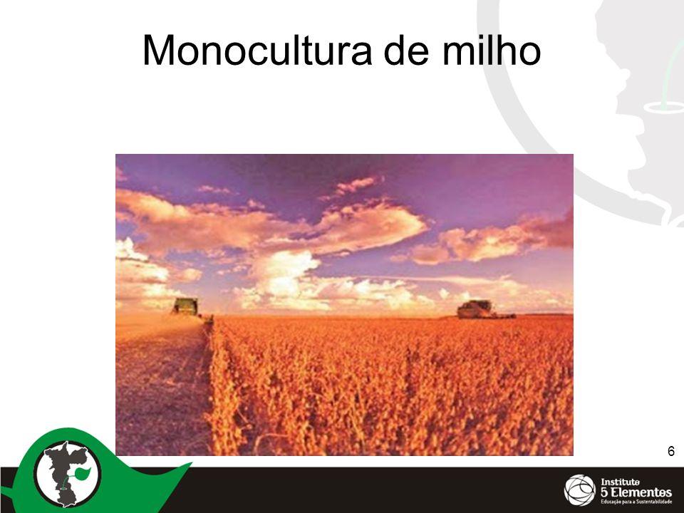 6 Monocultura de milho