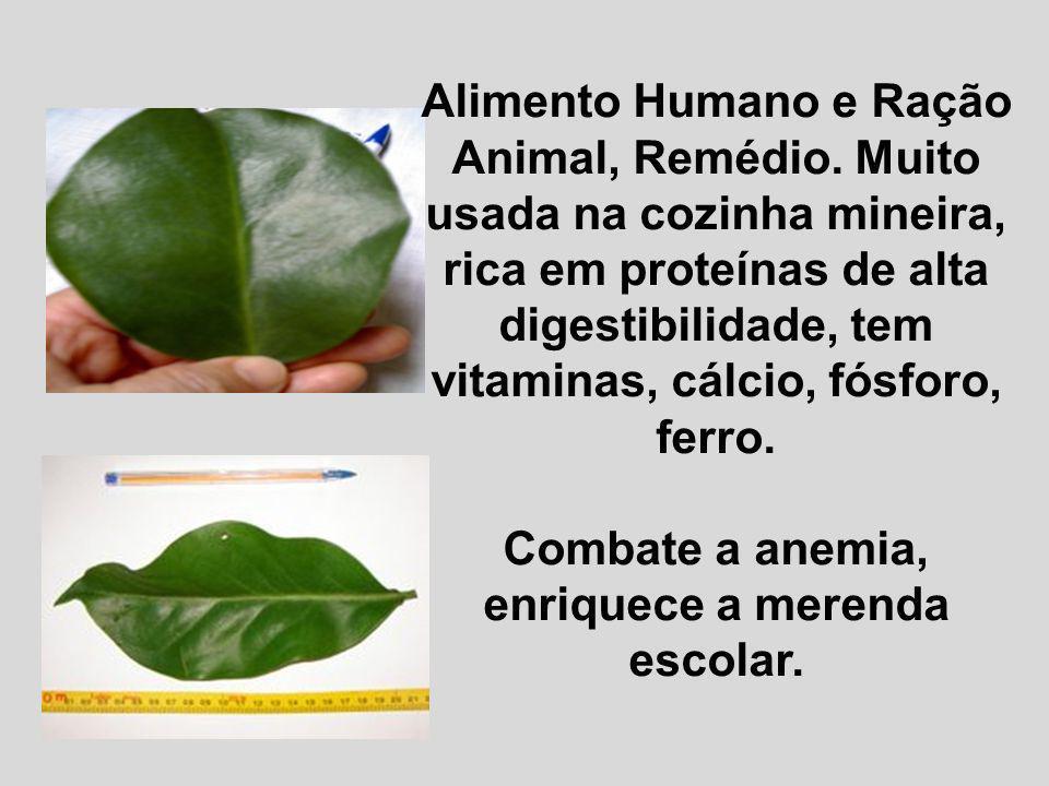 Alimento Humano e Ração Animal, Remédio. Muito usada na cozinha mineira, rica em proteínas de alta digestibilidade, tem vitaminas, cálcio, fósforo, fe