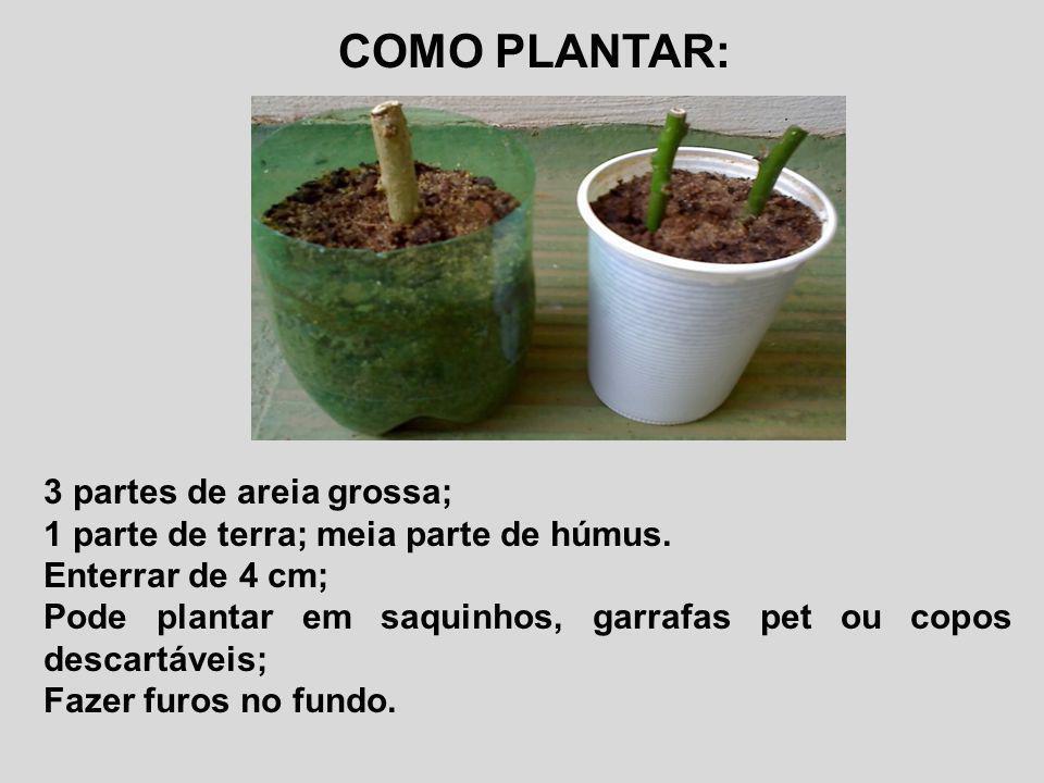 COMO PLANTAR: 3 partes de areia grossa; 1 parte de terra; meia parte de húmus. Enterrar de 4 cm; Pode plantar em saquinhos, garrafas pet ou copos desc