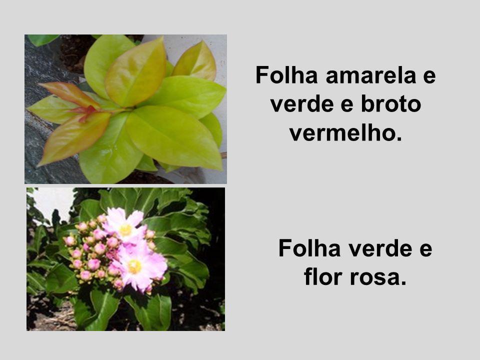 Folha amarela e verde e broto vermelho. Folha verde e flor rosa.