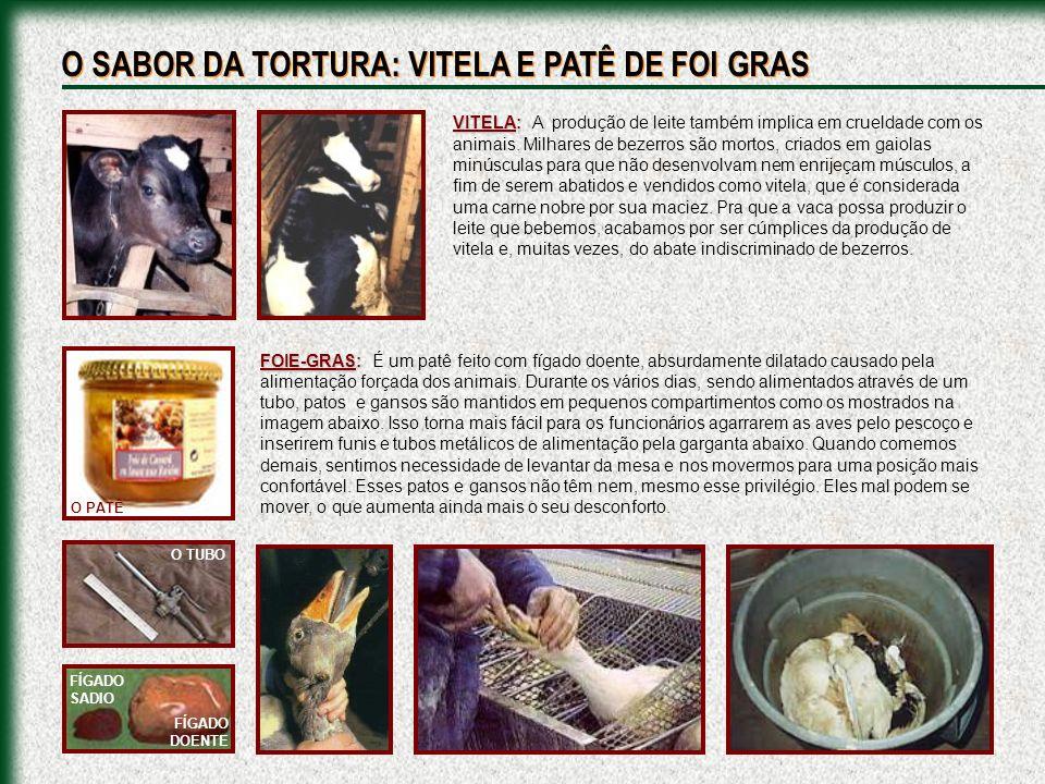 VITELA: VITELA: A produção de leite também implica em crueldade com os animais. Milhares de bezerros são mortos, criados em gaiolas minúsculas para qu