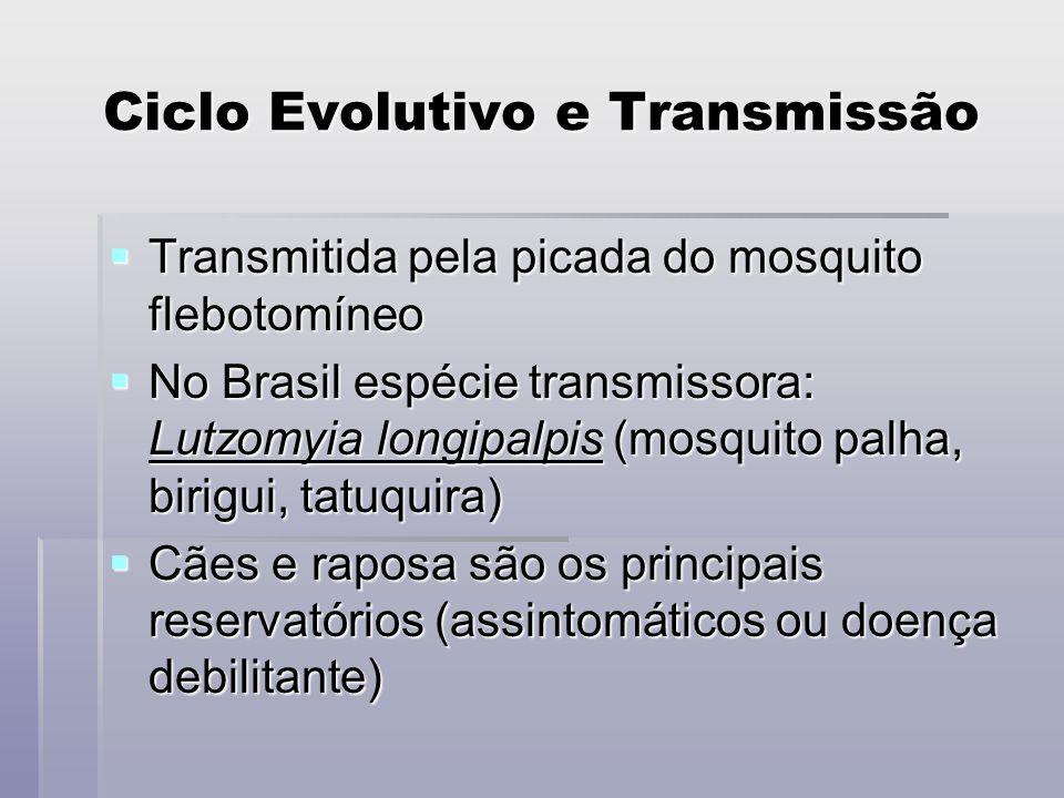 Ciclo Evolutivo e Transmissão Transmitida pela picada do mosquito flebotomíneo Transmitida pela picada do mosquito flebotomíneo No Brasil espécie tran