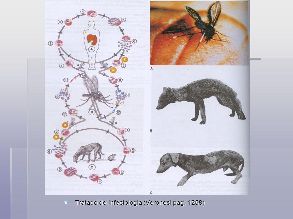 Tratado de Infectologia (Veronesi pag. 1258) Tratado de Infectologia (Veronesi pag. 1258)