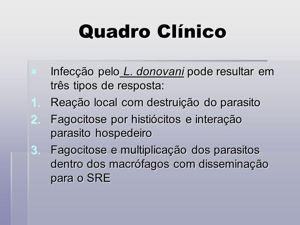 Quadro Clínico Infecção pelo L. donovani pode resultar em três tipos de resposta: Infecção pelo L. donovani pode resultar em três tipos de resposta: 1