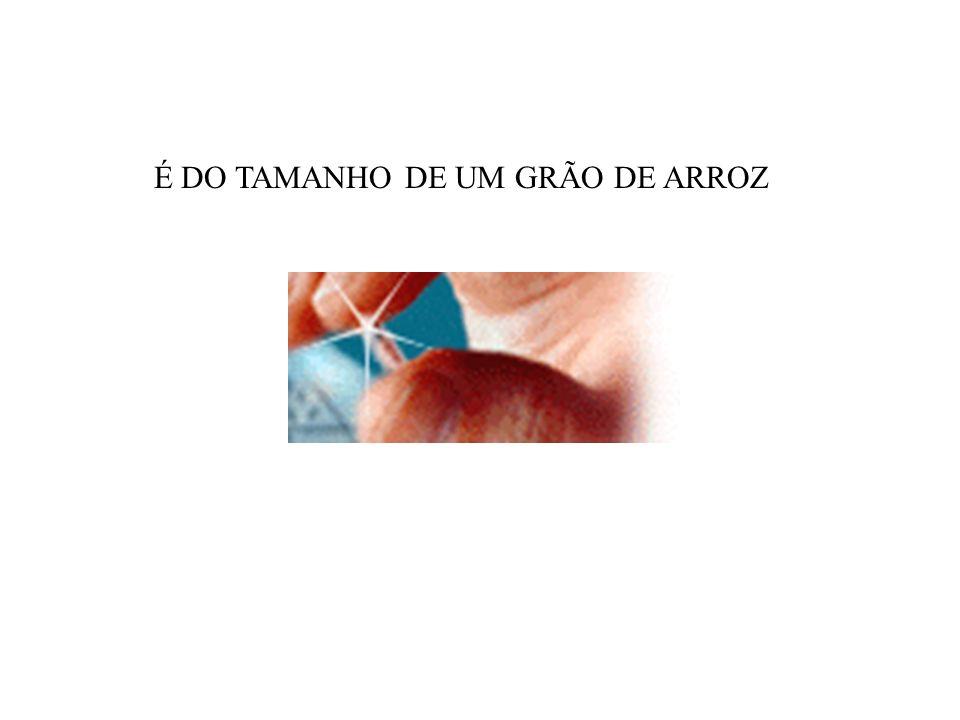 É DO TAMANHO DE UM GRÃO DE ARROZ
