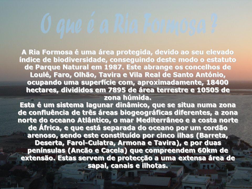 A Ria Formosa é uma área protegida, devido ao seu elevado índice de biodiversidade, conseguindo deste modo o estatuto de Parque Natural em 1987. Este