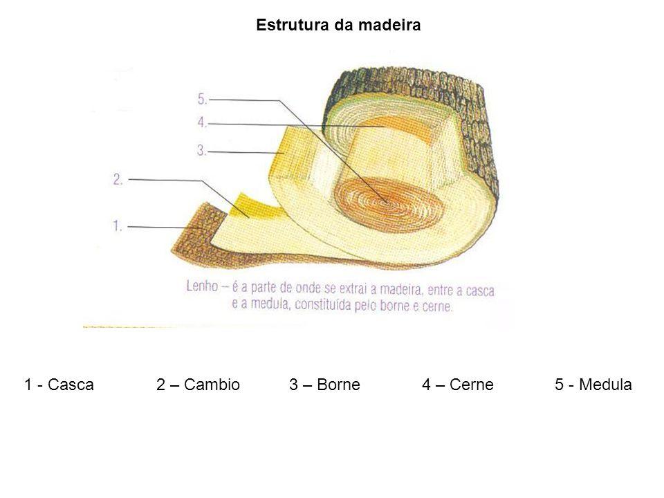 1 - Casca2 – Cambio3 – Borne4 – Cerne5 - Medula Estrutura da madeira