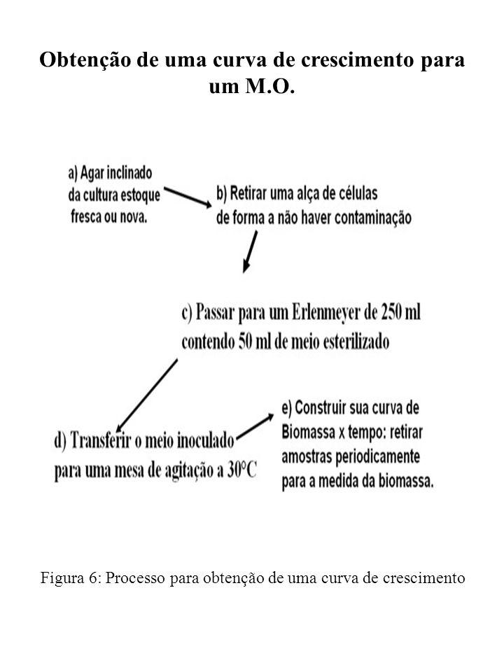 Obtenção de uma curva de crescimento para um M.O. Figura 6: Processo para obtenção de uma curva de crescimento