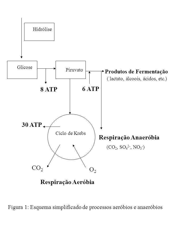 Hidrólise Glicose Piruvato 8 ATP Ciclo de Krebs 30 ATP CO 2 O2O2 Produtos de Fermentação ( lactato, álcoois, ácidos, etc.) 6 ATP Respiração Aeróbia Re