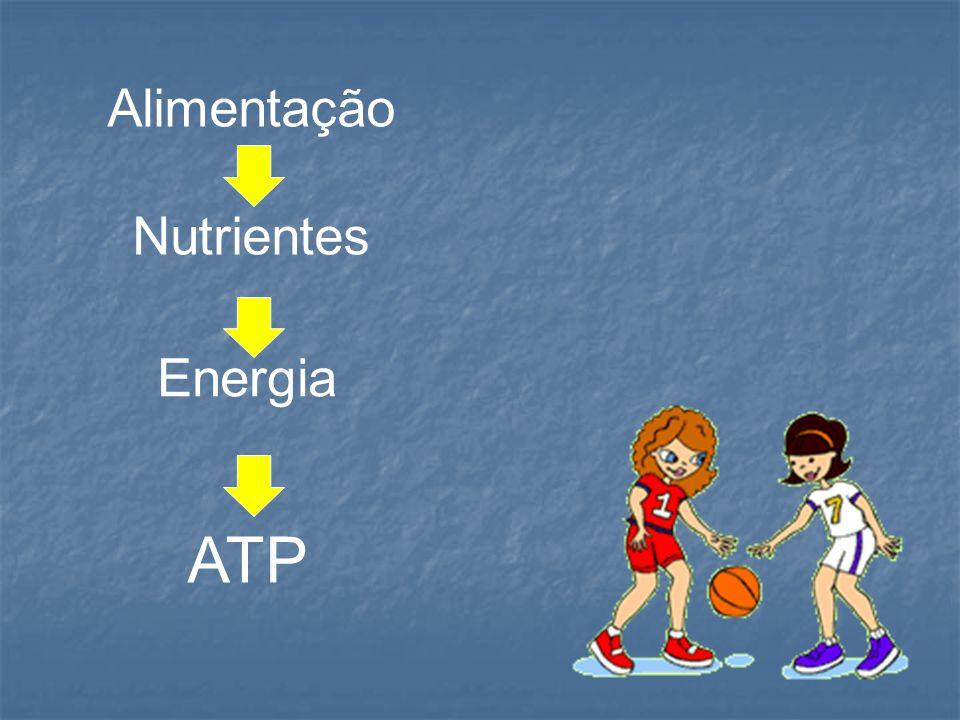 Alimentação Nutrientes ATP Energia