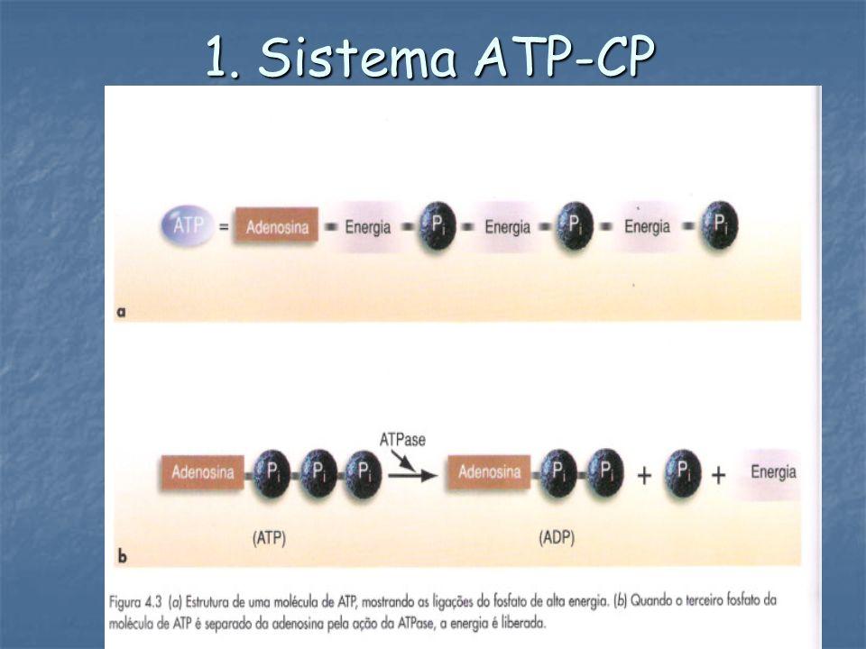 1. Sistema ATP-CP