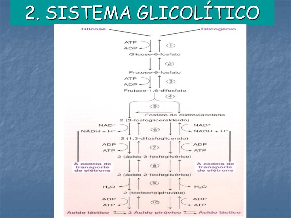 2. SISTEMA GLICOLÍTICO