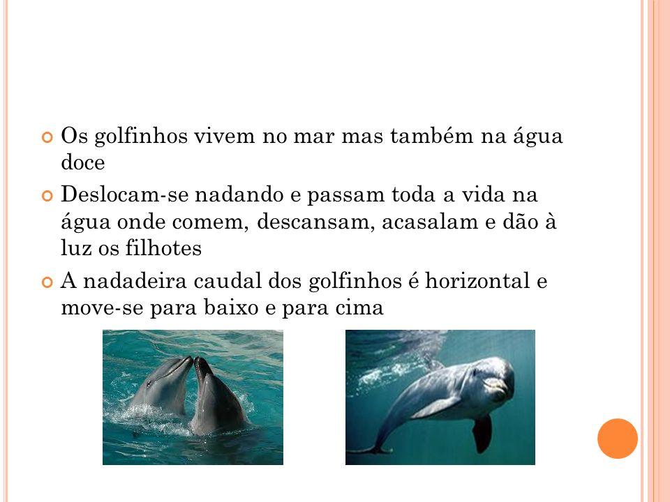 Os golfinhos vivem no mar mas também na água doce Deslocam-se nadando e passam toda a vida na água onde comem, descansam, acasalam e dão à luz os filhotes A nadadeira caudal dos golfinhos é horizontal e move-se para baixo e para cima