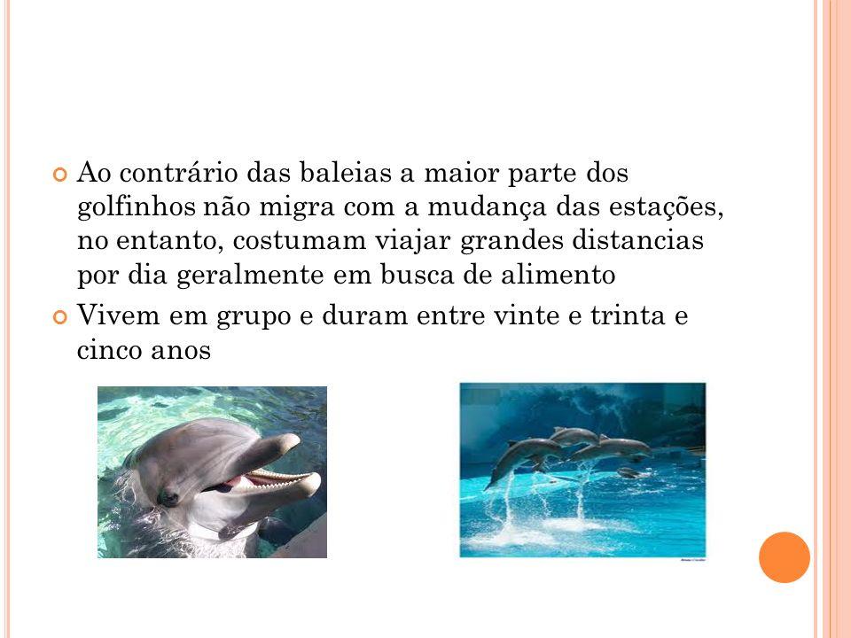 Os golfinhos vivem no mar mas também na água doce Deslocam-se nadando e passam toda a vida na água onde comem, descansam, acasalam e dão à luz os filh