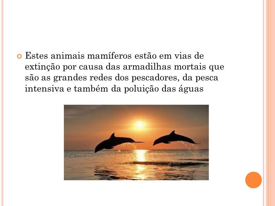 Estes animais mamíferos estão em vias de extinção por causa das armadilhas mortais que são as grandes redes dos pescadores, da pesca intensiva e também da poluição das águas