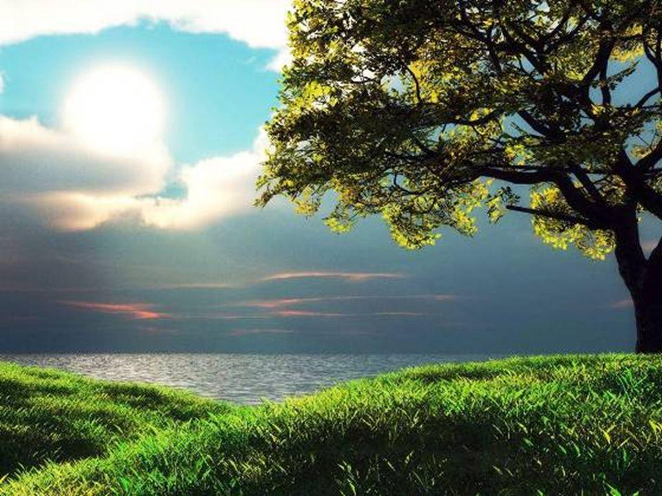 Às vezes o tempo voa como um pássaro; outras arrasta-se como um caracol. O homem é feliz quando não se apercebe se o passo do tempo é lesto ou moroso.