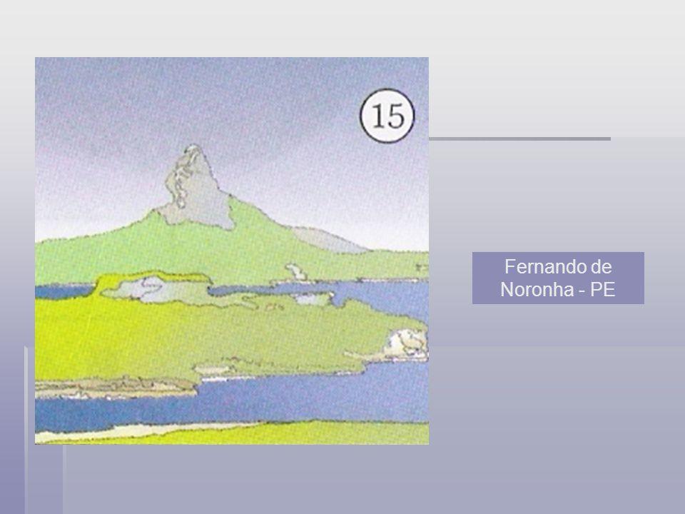 Página 22 Imagem 1: Imagem 1: Coerência: através das cores, folhagem combinam umas com as outras, fundo contrastando com a imagem.