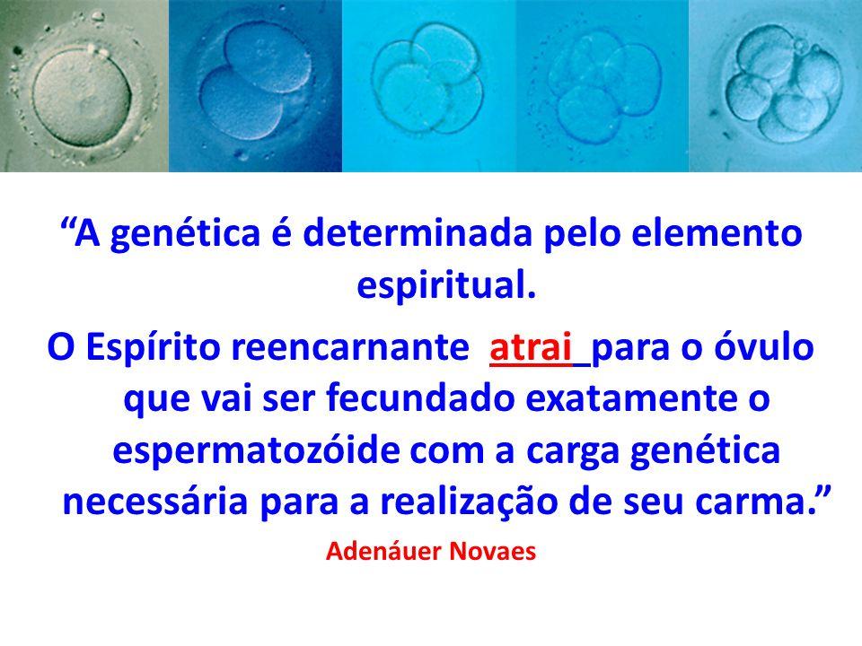 A genética é determinada pelo elemento espiritual. O Espírito reencarnante atrai para o óvulo que vai ser fecundado exatamente o espermatozóide com a