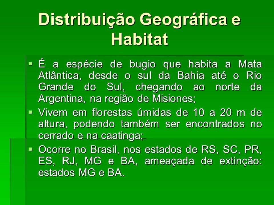 Distribuição Geográfica e Habitat É a espécie de bugio que habita a Mata Atlântica, desde o sul da Bahia até o Rio Grande do Sul, chegando ao norte da Argentina, na região de Misiones; É a espécie de bugio que habita a Mata Atlântica, desde o sul da Bahia até o Rio Grande do Sul, chegando ao norte da Argentina, na região de Misiones; Vivem em florestas úmidas de 10 a 20 m de altura, podendo também ser encontrados no cerrado e na caatinga; Vivem em florestas úmidas de 10 a 20 m de altura, podendo também ser encontrados no cerrado e na caatinga; Ocorre no Brasil, nos estados de RS, SC, PR, ES, RJ, MG e BA, ameaçada de extinção: estados MG e BA.