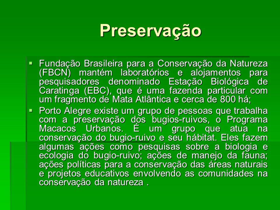 Preservação Fundação Brasileira para a Conservação da Natureza (FBCN) mantém laboratórios e alojamentos para pesquisadores denominado Estação Biológica de Caratinga (EBC), que é uma fazenda particular com um fragmento de Mata Atlântica e cerca de 800 há; Fundação Brasileira para a Conservação da Natureza (FBCN) mantém laboratórios e alojamentos para pesquisadores denominado Estação Biológica de Caratinga (EBC), que é uma fazenda particular com um fragmento de Mata Atlântica e cerca de 800 há; Porto Alegre existe um grupo de pessoas que trabalha com a preservação dos bugios-ruivos, o Programa Macacos Urbanos.