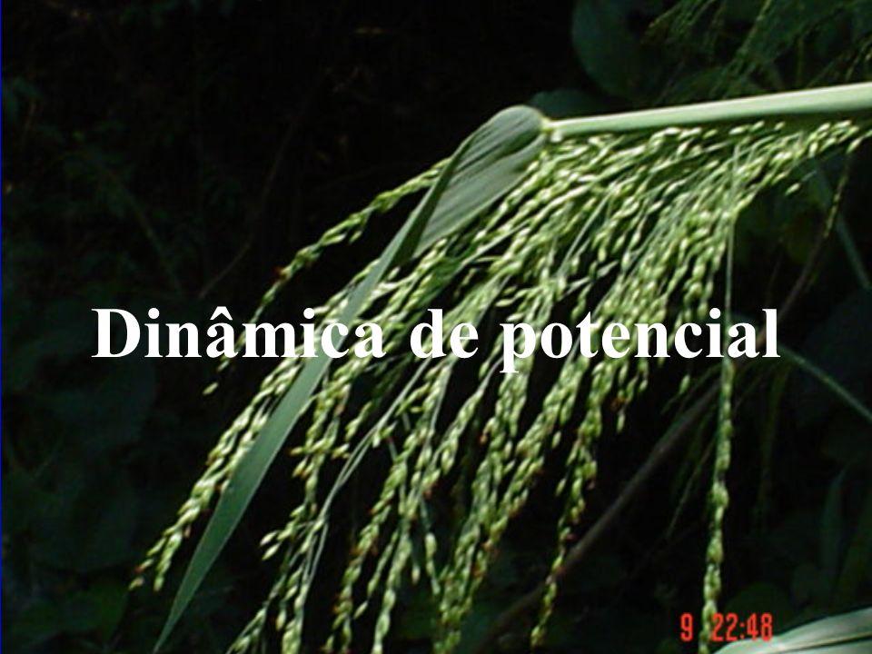 Dinâmica Grupal Dinâmica Universal Dinâmica Potencial Dinâmica social Dinâmica individual
