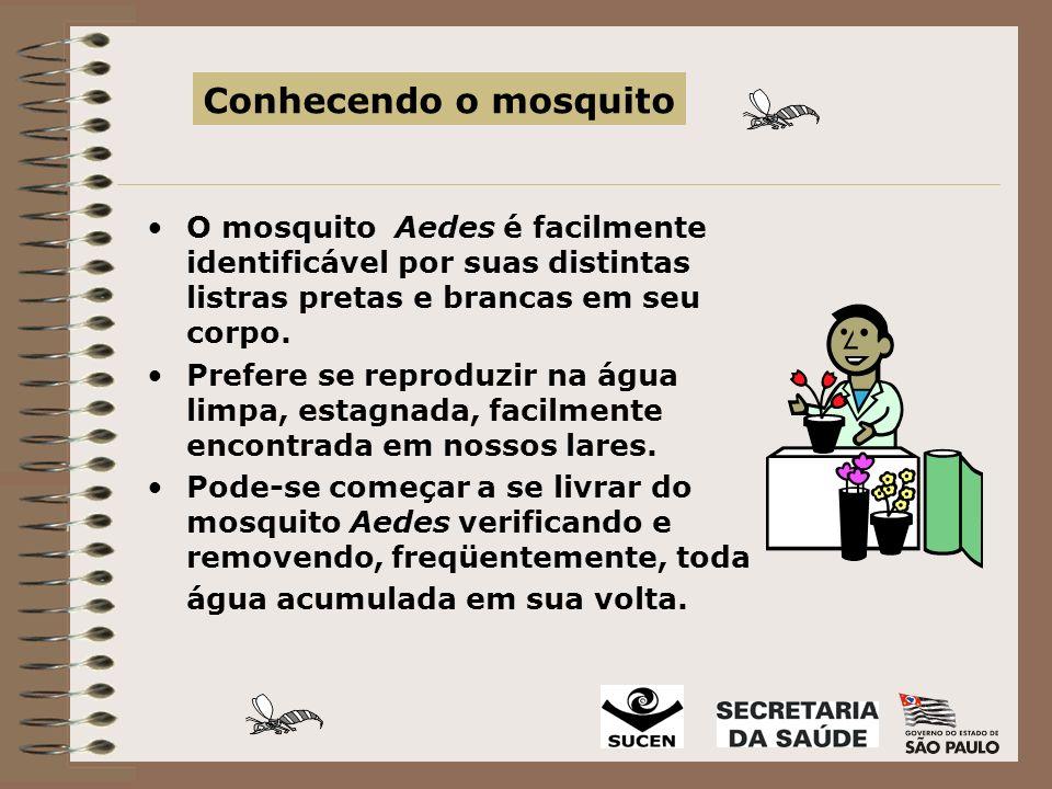 O mosquito Aedes é facilmente identificável por suas distintas listras pretas e brancas em seu corpo.
