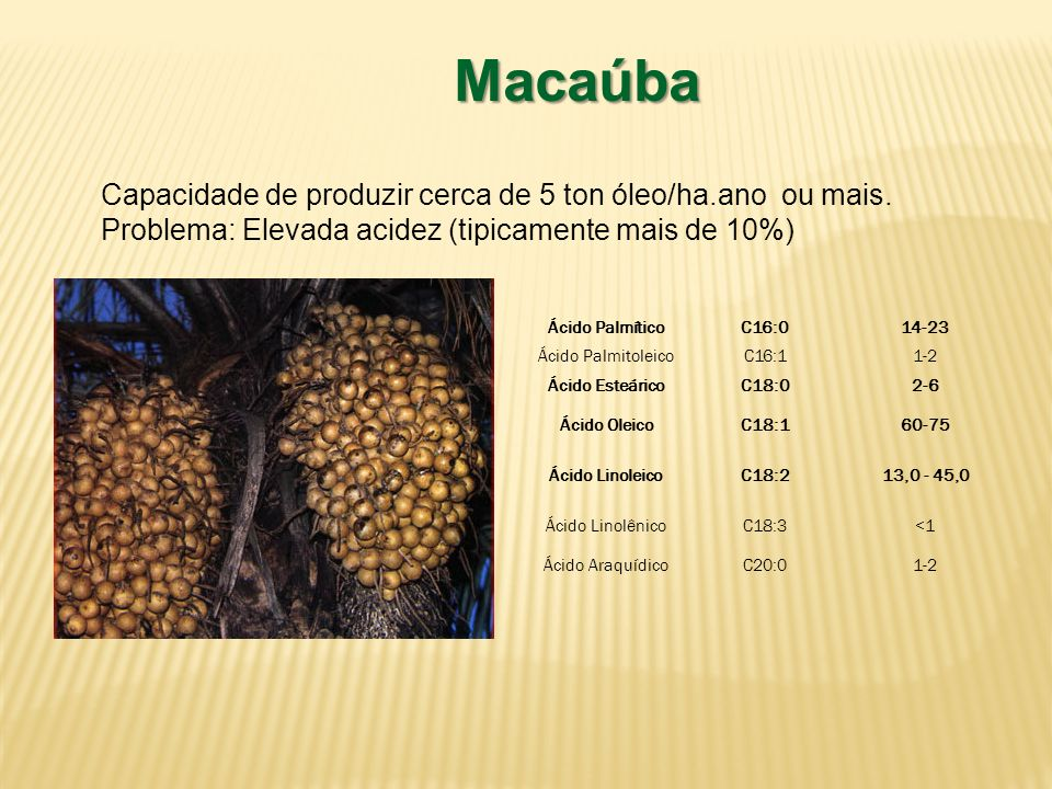 Macaúba Capacidade de produzir cerca de 5 ton óleo/ha.ano ou mais. Problema: Elevada acidez (tipicamente mais de 10%) Ácido PalmíticoC16:014-23 Ácido