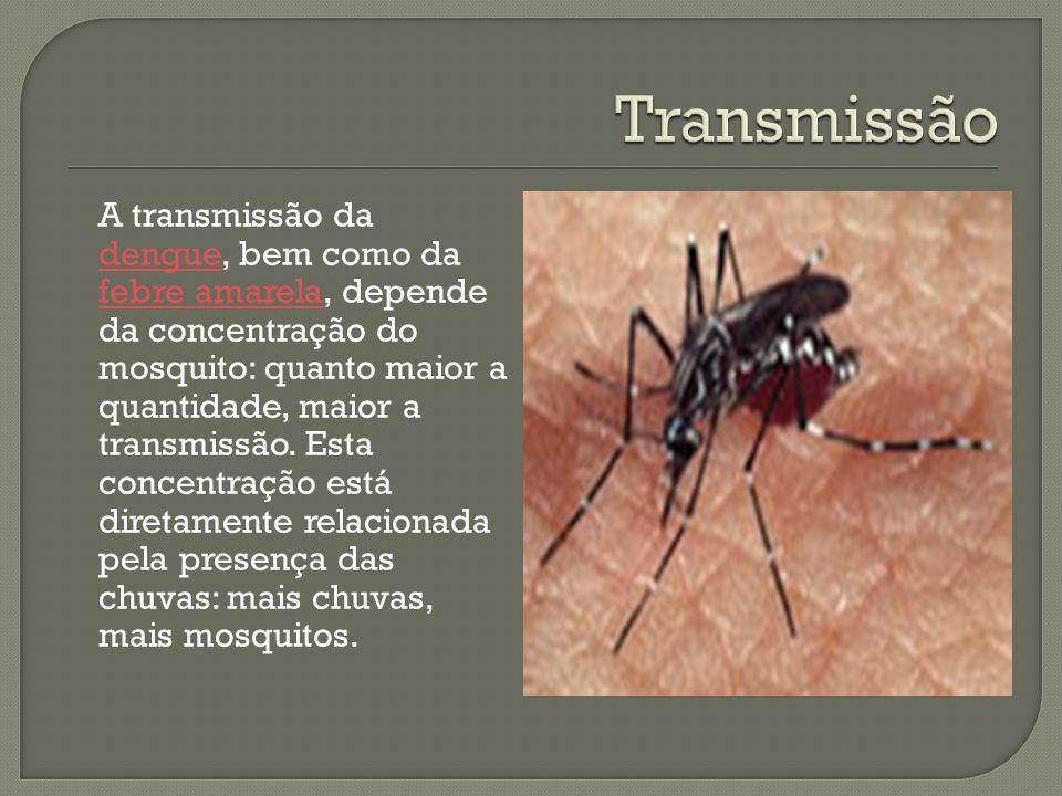 A transmissão da dengue, bem como da febre amarela, depende da concentração do mosquito: quanto maior a quantidade, maior a transmissão. Esta concentr