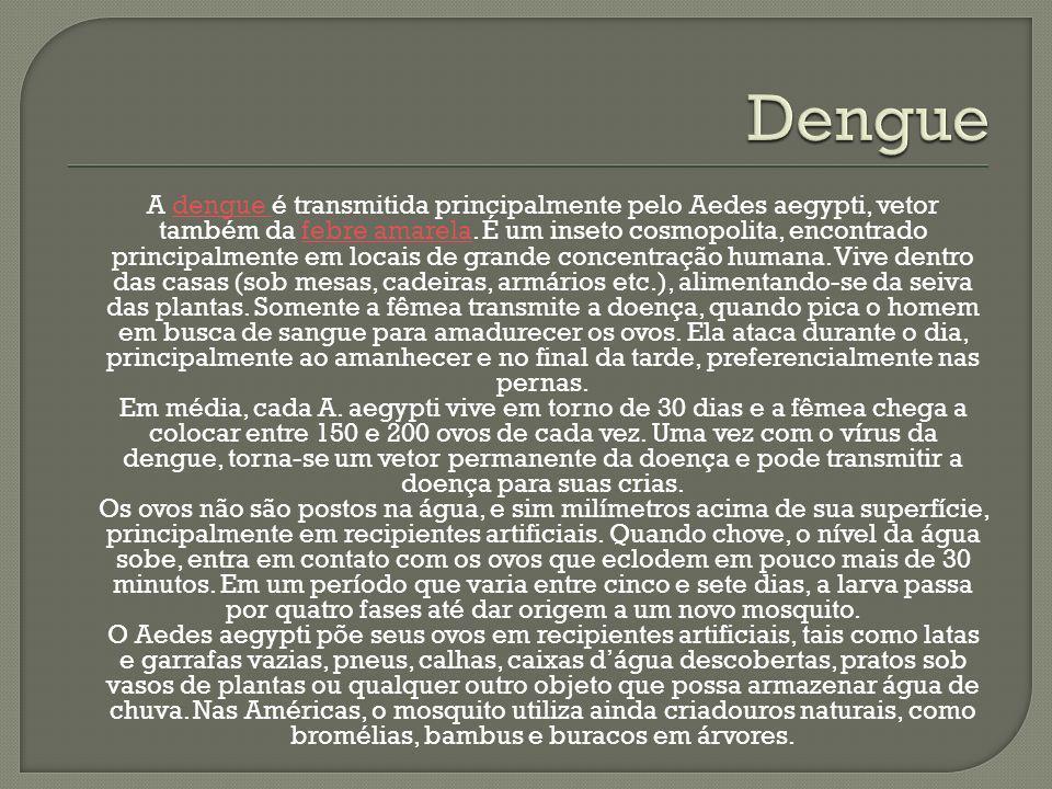 A dengue é transmitida principalmente pelo Aedes aegypti, vetor também da febre amarela. É um inseto cosmopolita, encontrado principalmente em locais