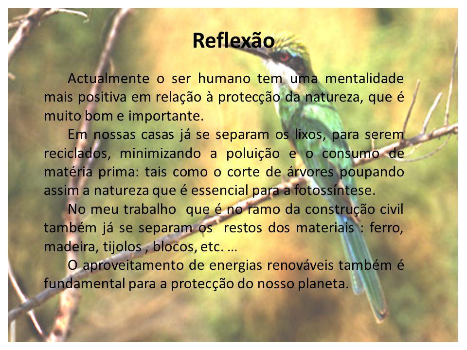 Actualmente o ser humano tem uma mentalidade mais positiva em relação à protecção da natureza, que é muito bom e importante. Em nossas casas já se sep