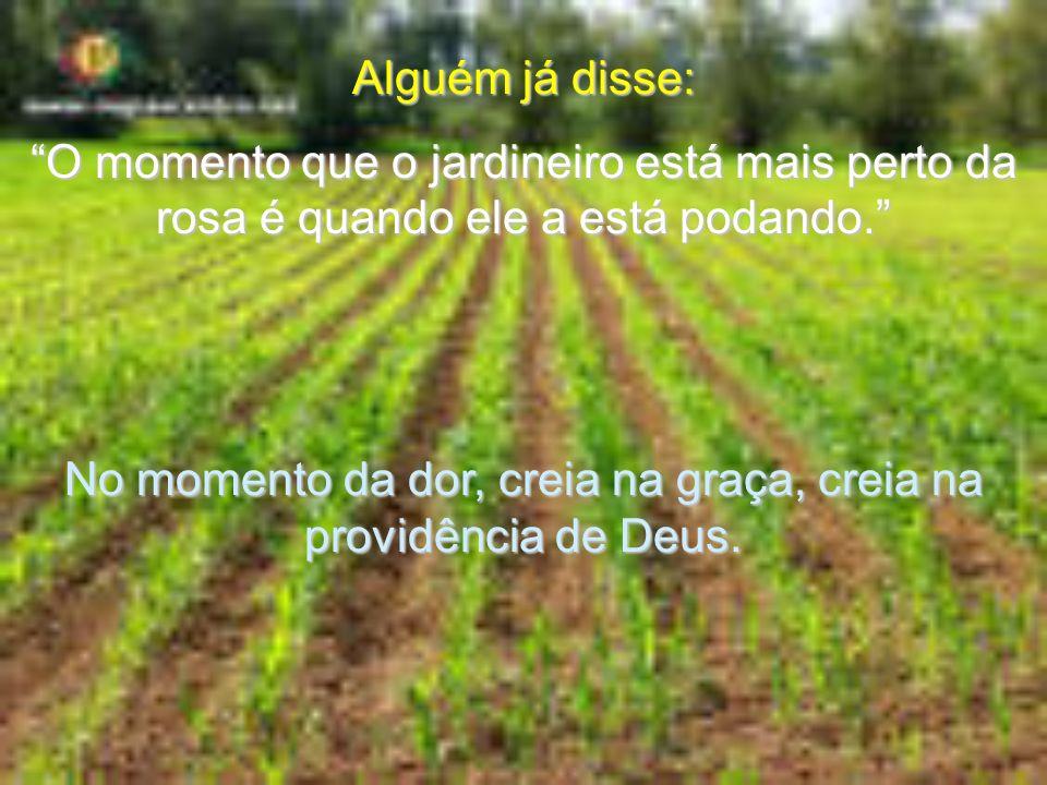 Alguém já disse: O momento que o jardineiro está mais perto da rosa é quando ele a está podando.