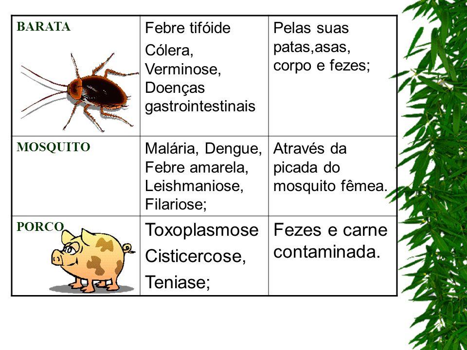 BARATA Febre tifóide Cólera, Verminose, Doenças gastrointestinais Pelas suas patas,asas, corpo e fezes; MOSQUITO Malária, Dengue, Febre amarela, Leish