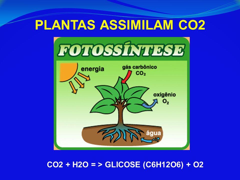 PLANTAS ASSIMILAM CO2 CO2 + H2O = > GLICOSE (C6H12O6) + O2