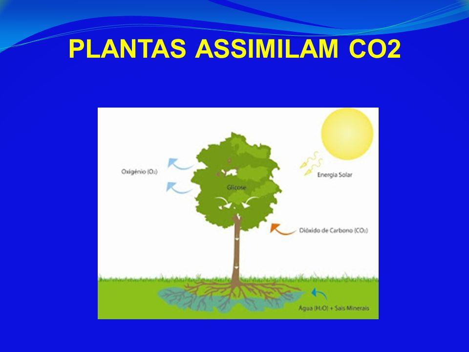 PLANTAS ASSIMILAM CO2