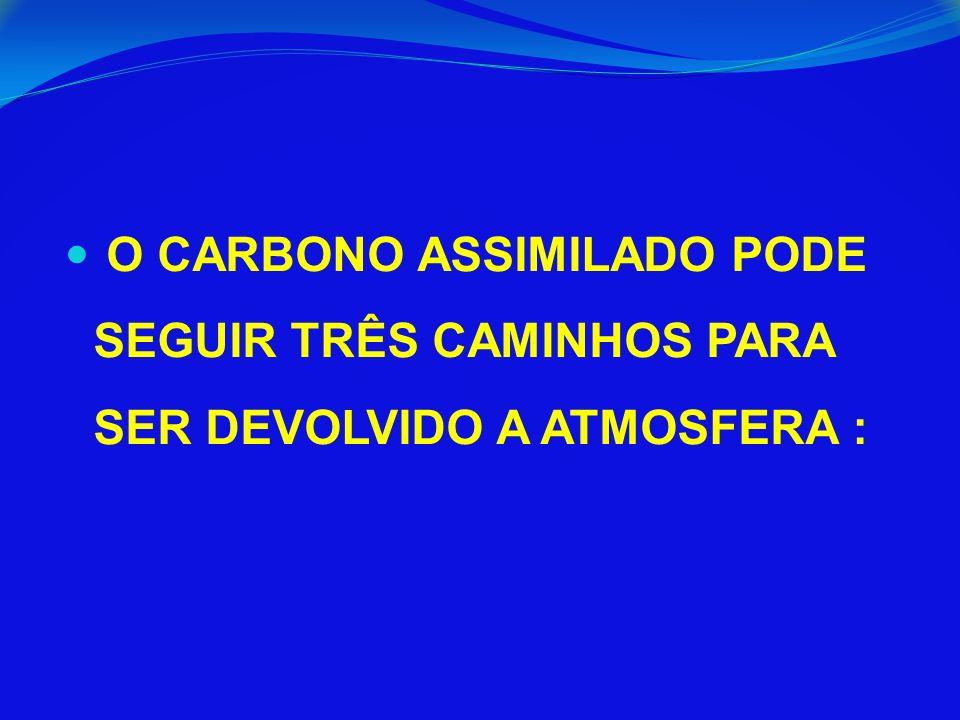 O CARBONO ASSIMILADO PODE SEGUIR TRÊS CAMINHOS PARA SER DEVOLVIDO A ATMOSFERA :