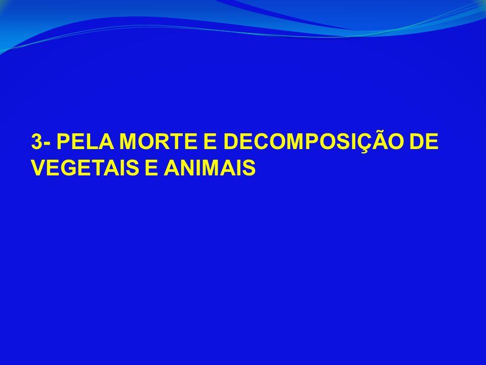 3- PELA MORTE E DECOMPOSIÇÃO DE VEGETAIS E ANIMAIS